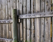 Shelly Fox - Old Wooden Fence