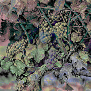 Nudes Digital Art - Old World Grapes by Ken Evans