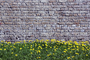 Aleksandr Volkov - Old yellow bricks wall...