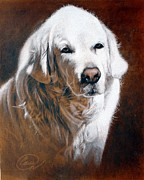 Beautiful Golden Retriever Pastels Prints - Olden Golden Print by Albert Casson