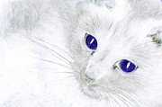 Pussy Cat Digital Art - Ole Blue Eyes by Camille Lopez