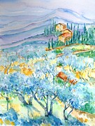Italian Villas Paintings - Olive Groves of Cozille Tuscany  by Trudi Doyle