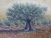 Holy Land Drawings - Olive in the summer  by Miki Karni