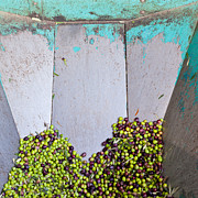 (olea Europaea) Photos - Olive Mill Steel Feeder Container by Stephan Pietzko