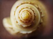 Olive Shell Print by Elena Nosyreva