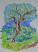 Lone Tree Drawings Framed Prints - Olive Tree in Fall Framed Print by Esther Newman-Cohen