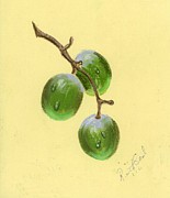 Miniature Drawings - Olives by Ruth Seal