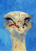 Ostrich Painting Framed Prints - Ollie Framed Print by Susan Duxter