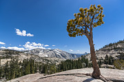 Spring Scenery Art - Olmsted point Yosemite by Francesco Emanuele Carucci