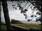 Joan  Minchak - Omaha Beach under Trees