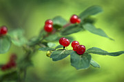Bright Green Posters - Ominous Berries Poster by Christina Rollo