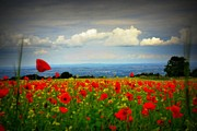 Poppies Field Digital Art - On a beautiful summers day by Gail Girvan