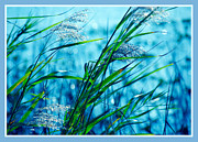 Sparkling Framed Prints - On a Blue Afternoon Framed Print by Susanne Van Hulst