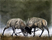 Elk Drawings - On A Frosty Morn by Melissa Fuller