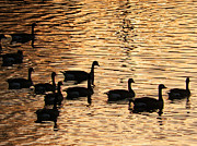 Steven Clayton - On a Golden Pond