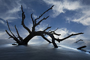 Tree Roots Metal Prints - On a MIsty Morning Metal Print by Debra and Dave Vanderlaan
