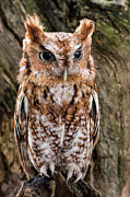 Owl Metal Prints - On Alert Metal Print by Dale Kincaid