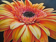 Gerbera Drawings - On Big Smiling Gerbera by Karina Griffiths