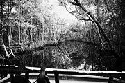 Mangrove Forest Photo Prints - On Board An Airboat Ride Through A Mangrove Jungle In Everglades City Florida Everglades Usa  Print by Joe Fox