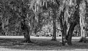 Kathleen K Parker - On Destrehan Plantation Monochrome