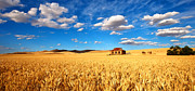 Farm Photo Prints - On Golden Fields Print by Bill  Robinson