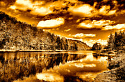Golds Framed Prints - On Golden Pond Framed Print by David Patterson