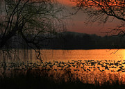 Golden Pond Prints - On Golden Pond Print by Lori Deiter