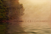 Peaceful Pond Posters - On Golden Pond Poster by Tom Mc Nemar