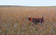 Shorthaired Prints - On Point - German Shorthaired Pointer Print by James Hammen