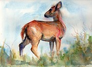 Deer On Beach Art - On Second Thought by Marias Watercolor
