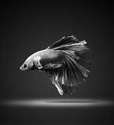 Betta Prints - On Stage Print by Visarute Angkatavanich