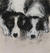 Border Collie Drawing Posters - On The Border Poster by Cori Solomon