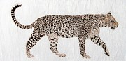 Wildlife Mixed Media Originals - On the Prowl by Stephanie Grant