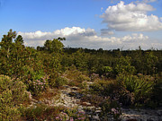 Polk County Florida Photos - On The Ridge. Catfish Creek Preserve. by Chris  Kusik