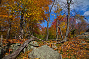 Autumn Colors Art - On the Rocks above Eagle Bay by David Patterson