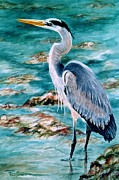 Shorebird Paintings - On the Rocks Great Blue Heron by Roxanne Tobaison