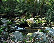 Great Smoky Mountains National Park Framed Prints - On The Rocks Framed Print by Mel Steinhauer