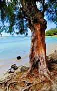 Jenny Rainbow - On the Shore 1. Mauritius