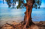 Jenny Rainbow - On the Shore. Mauritius