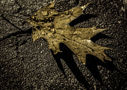 Leaf Art - On the sidewalk by Bob Orsillo