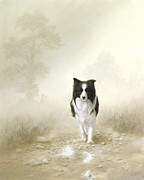 Border Collie Drawing Posters - On the way home Poster by John Silver