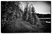 Cary Metal Prints - On the way to Cary Lake Metal Print by David Patterson