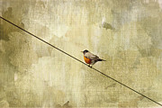 Red Bird Prints - On The Wire Print by Rebecca Cozart