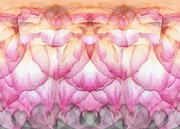 Ivory Digital Art Prints - Once A Rose Print by Wendy J St Christopher