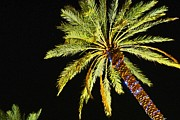 Christmas Trees Digital Art - One Christmas Palm by Michael Thomas