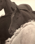 Quarter Horses Originals - One Eyed Jack by Cheryl Hrudka