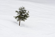 Lots Of Snow Prints - One little tree in the snow in winter Print by Matthias Hauser