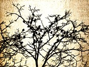 Crows In Trees Framed Prints - One little two little Framed Print by K Hoover