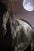 Forelock Photos - One Moonlit Night D1458 by Wes and Dotty Weber