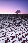 Ploughed Prints - One more tree Print by John Farnan